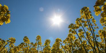 "Susanne Nilsson ""Sun flare""  www.flickr.com/photos/infomastern/34412581660"
